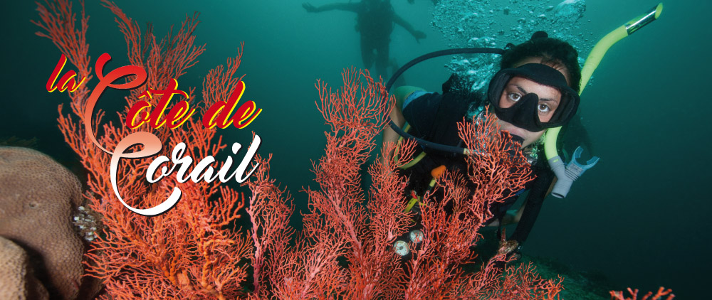 Sommaire Corail